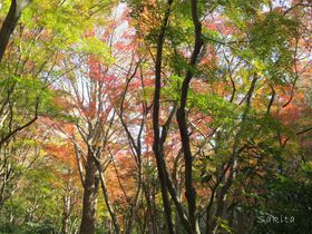 苔・シダ・紅葉の美空間!鎌倉アルプス「獅子舞コース」の魅力とは?