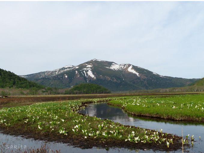 6キロ続く湿原を楽しめる「尾瀬ヶ原」日帰りはどこまで?