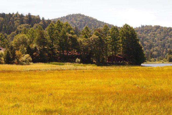 金色の野に降り立とう!尾瀬・6km続く草紅葉でナウシカ気分