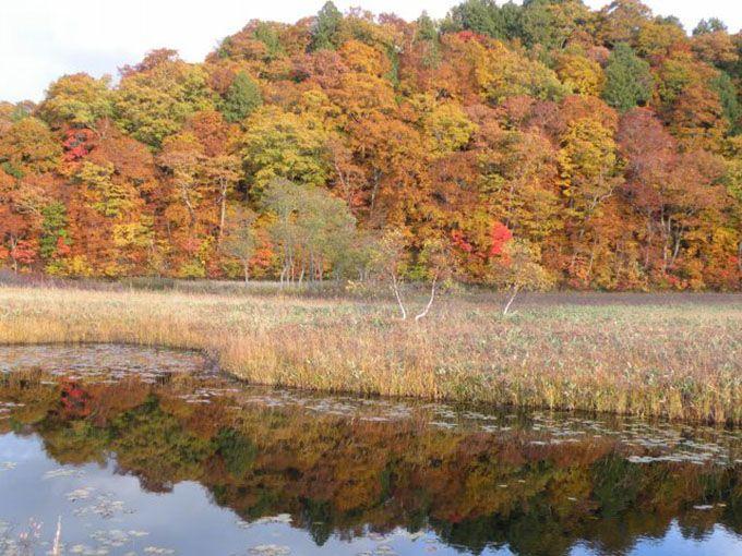 2018年の尾瀬ヶ原や尾瀬沼の草紅葉の見頃はいつ?