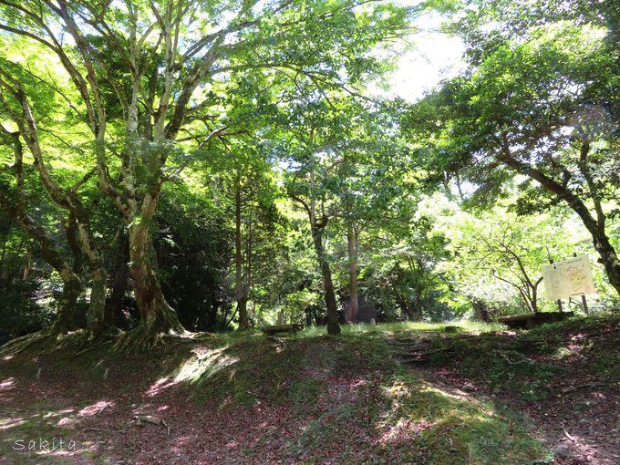 日高邸跡は梅ヶ瀬渓谷のハイライト