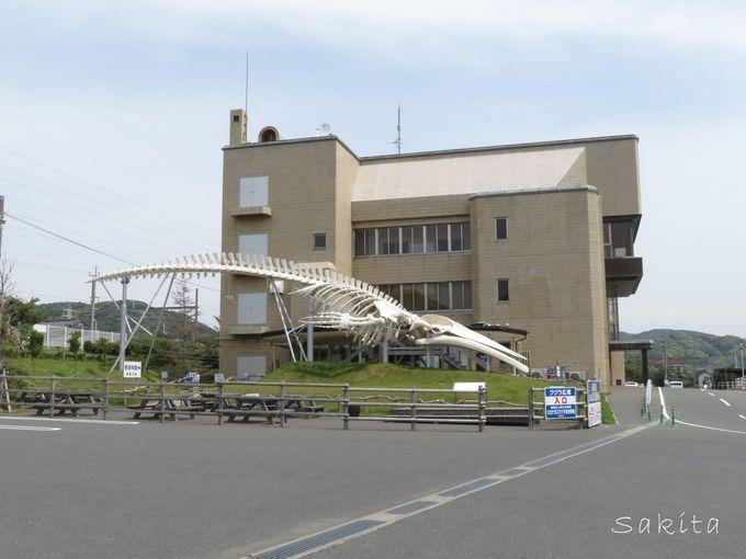 散策の拠点はJR和田浦駅&道の駅WA・O!