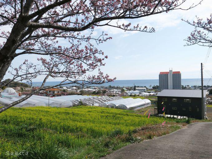 「花嫁街道」のある和田の町とは?