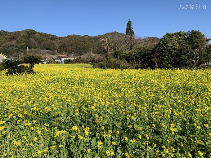 和田浦のお花畑・抱湖園などで花のリレーを楽しもう!