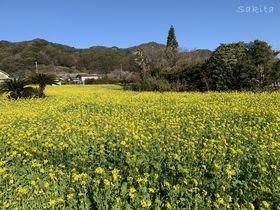 花と鯨の「花嫁街道」ハイキング!南房総市・和田町の魅力とは?