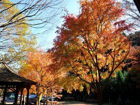 千葉・養老渓谷の2大ハイキングコース比較!紅葉や日帰り温泉も