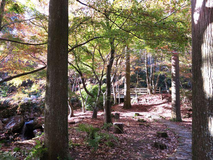 紅葉のトンネルへ!森の散策のすすめ