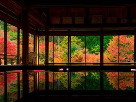 SNSで話題!佐賀「環境芸術の森」の紅葉リフレクションが美しい