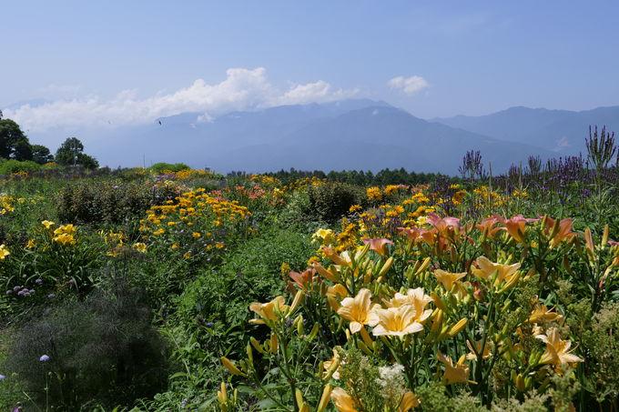 標高1,200mから始まる花の旅