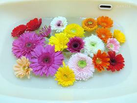憧れの花手水をおうちでやってみた!ハイコスパの癒し体験をご紹介