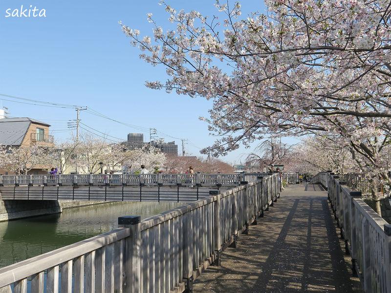 東京江戸川区・約3キロの「新川千本桜」で江戸情緒あふれるお花見を