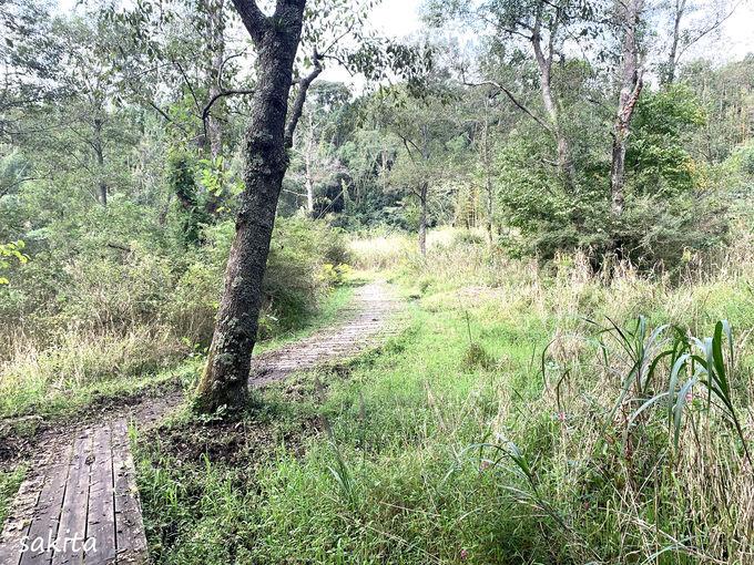 いっせんぼくへの路とハンノ木湿原
