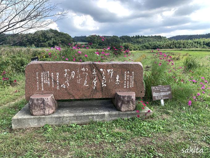 武田川コスモスロードとは