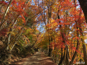 富士山×紅葉!山梨・鳴沢村「紅葉台展望レストハウス」へハイキング