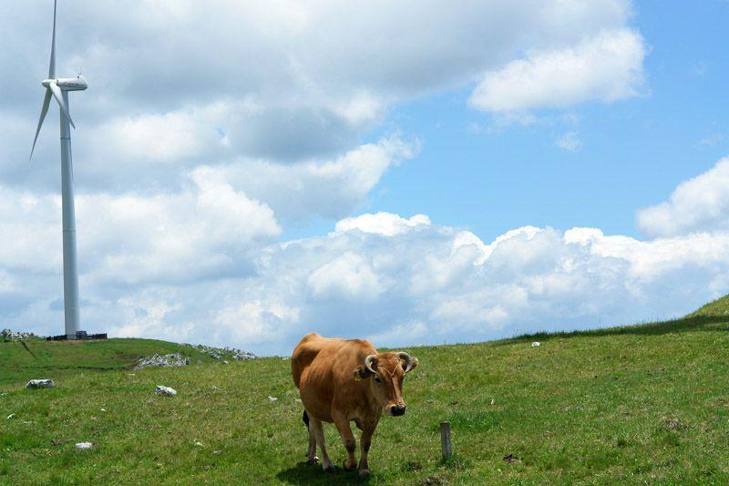 まさにラピュタ!雲上の牧場