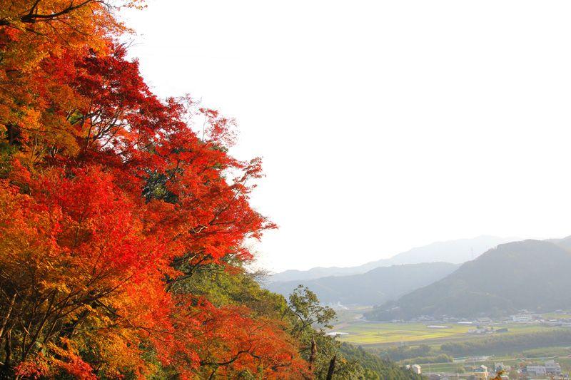 白滝の上からは紅葉と大洲盆地の風景を一望