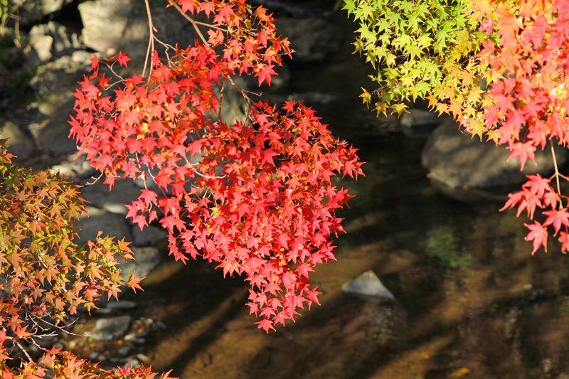 現役の水車小屋まで!日本の美が残る渓流散策