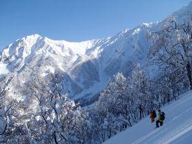 真っ白なブナ林でスノーシューを堪能!鳥取・大山「森の国」