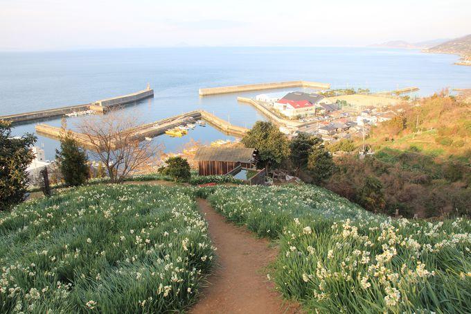 水仙畑の最上部からは瀬戸内海の絶景が一望!