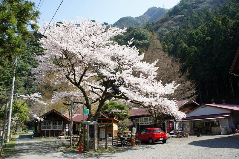 西日本最高峰!桜も絶景ドライブも…四季を通じて楽しめる、愛媛・石鎚山