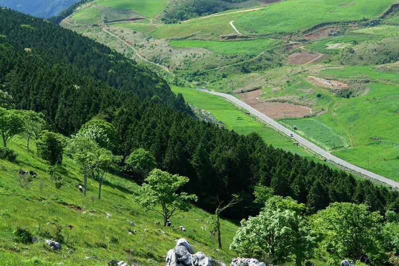 源氏ヶ駄馬から見下ろす大野ヶ原の風景がすごい!