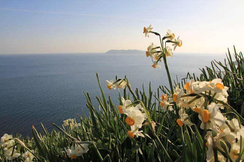 海とスイセンと島の美しい絶景に感動!
