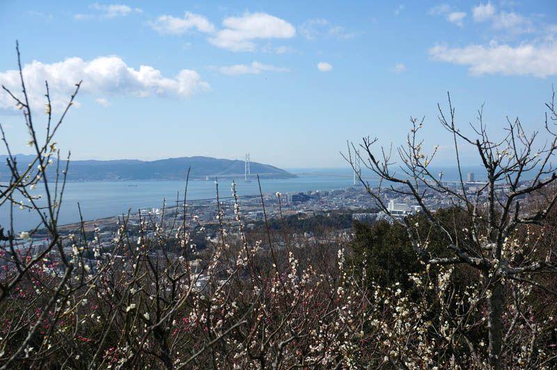 海と梅の絶景と遊べる梅林!「須磨浦山上遊園」