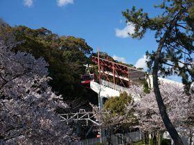 昼も夜も!神戸「須磨浦公園」は楽しみ満載の花見スポット