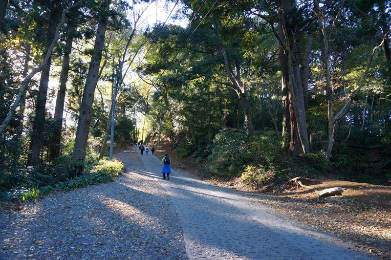 秋の要素が集約された1号路がオススメのコース