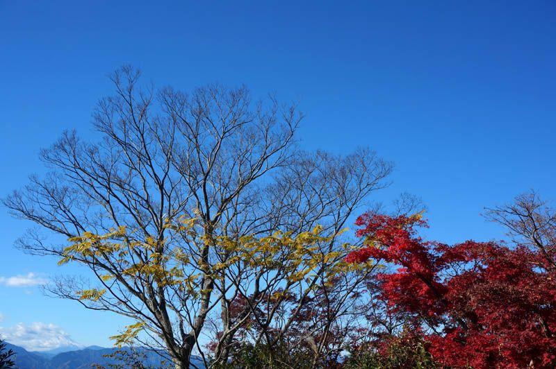 高尾山頂上で楽しむ、富士山・紅葉・お蕎麦