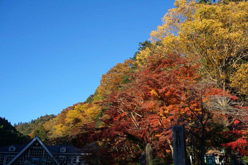 紅葉の高尾山に登るには朝8時までの到着を目指そう!