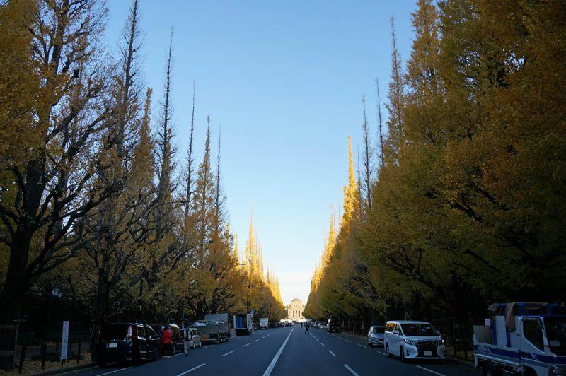 朝の「明治神宮外苑」の銀杏並木は静かでゆっくり黄葉散策