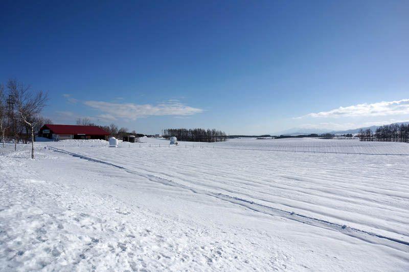 雪に埋もれた美瑛の丘をワイルドにめぐろう!