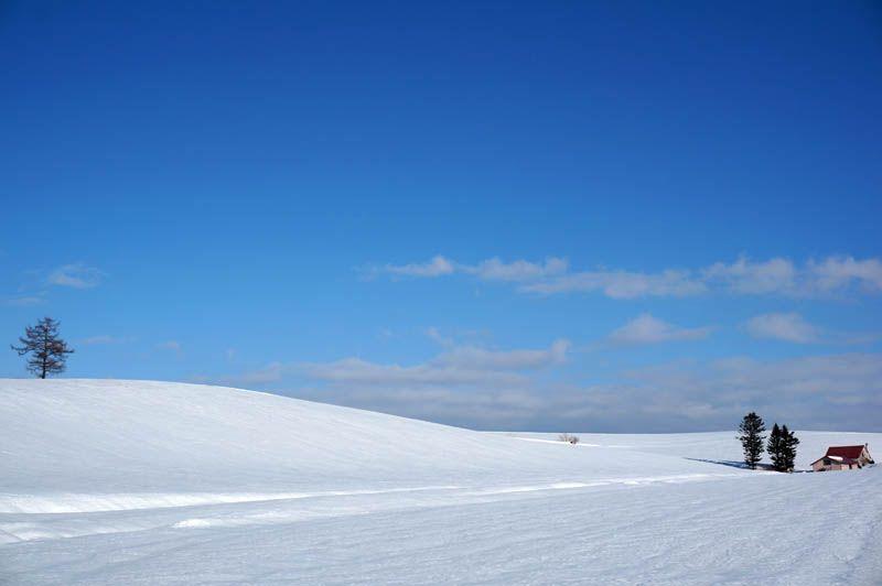 雪が減る3月が狙い目!レンタカーで巡る北海道・美瑛の銀世界