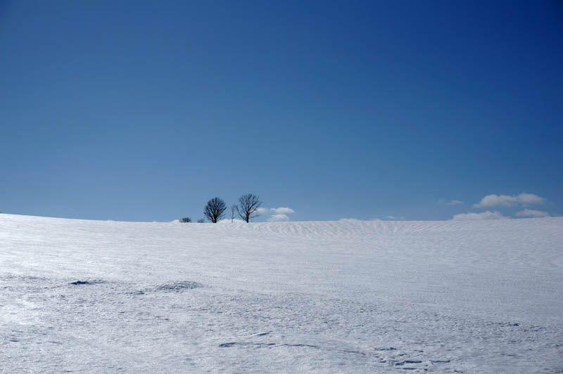 冬の美瑛で最もアクセスしやすい「木めぐり」