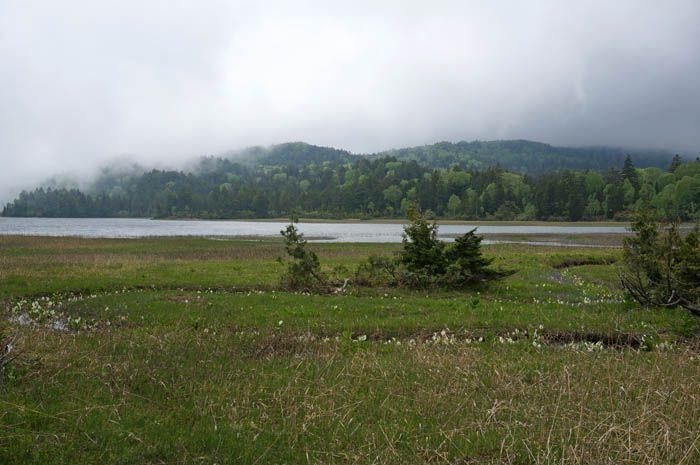 尾瀬沼散策で美しい風景や水芭蕉、高山植物を満喫