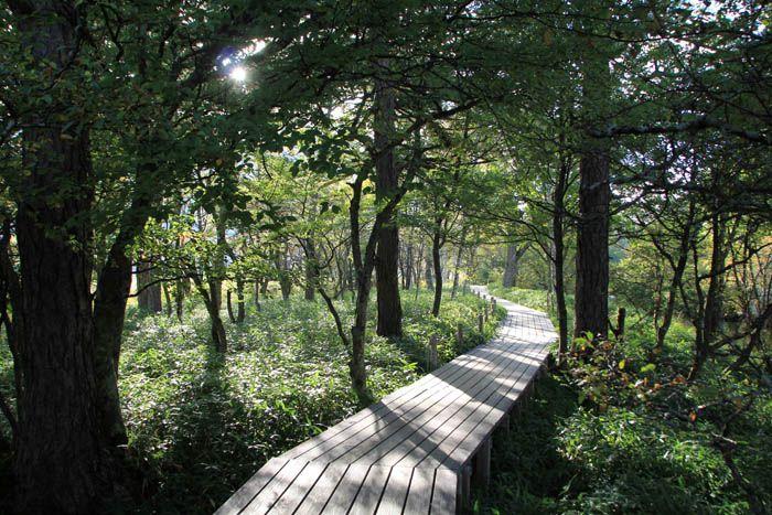 川が流れる森の早朝ハイキングは静かで美しい!