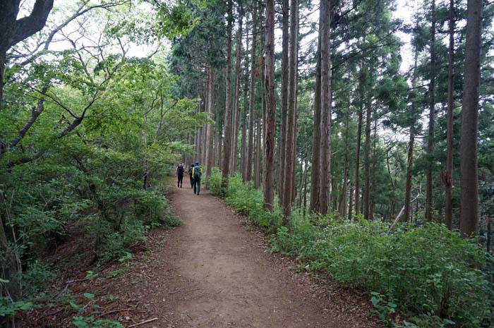 ぐんぐん進める平坦で歩きやすい縦走ルート