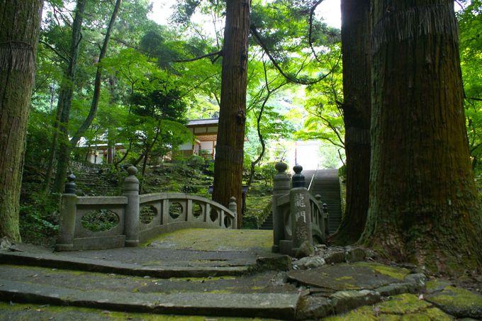 山門の代わりとしてあるのは樹齢300年以上の四本杉