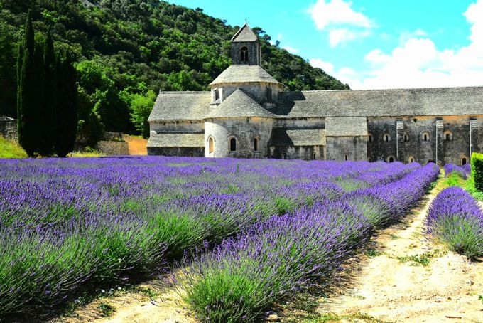 セナンク修道院の物語のように美しい夏の風物詩