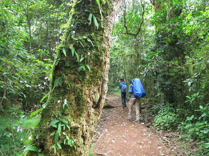 初日のコースは生い茂るジャングル。