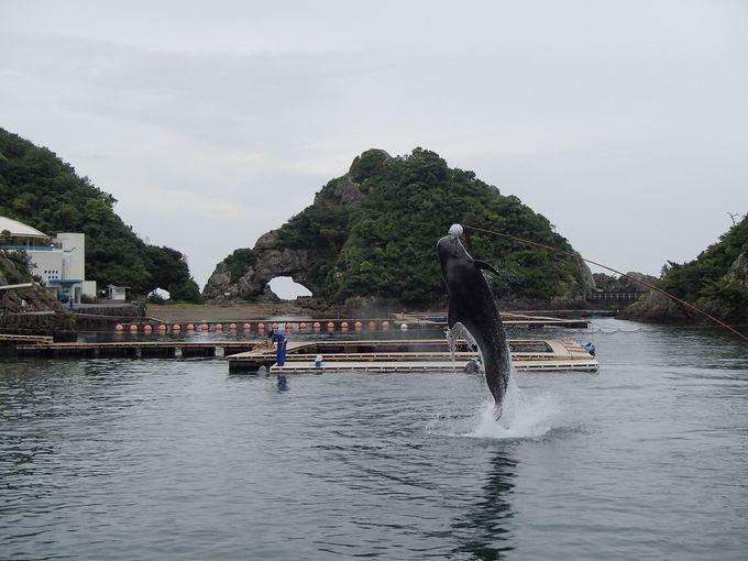 他の水族館とはココが違う。入り江の天然プールでのクジラショー