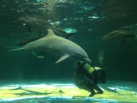 イルカ漁で注目の和歌山県「太地くじら浜公園」でイルカやクジラと触れ合いながら共生の歴史を学ぼう!