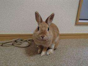 ウサギが部屋を訪問!和歌山の「BKウィークリー&ホテル」