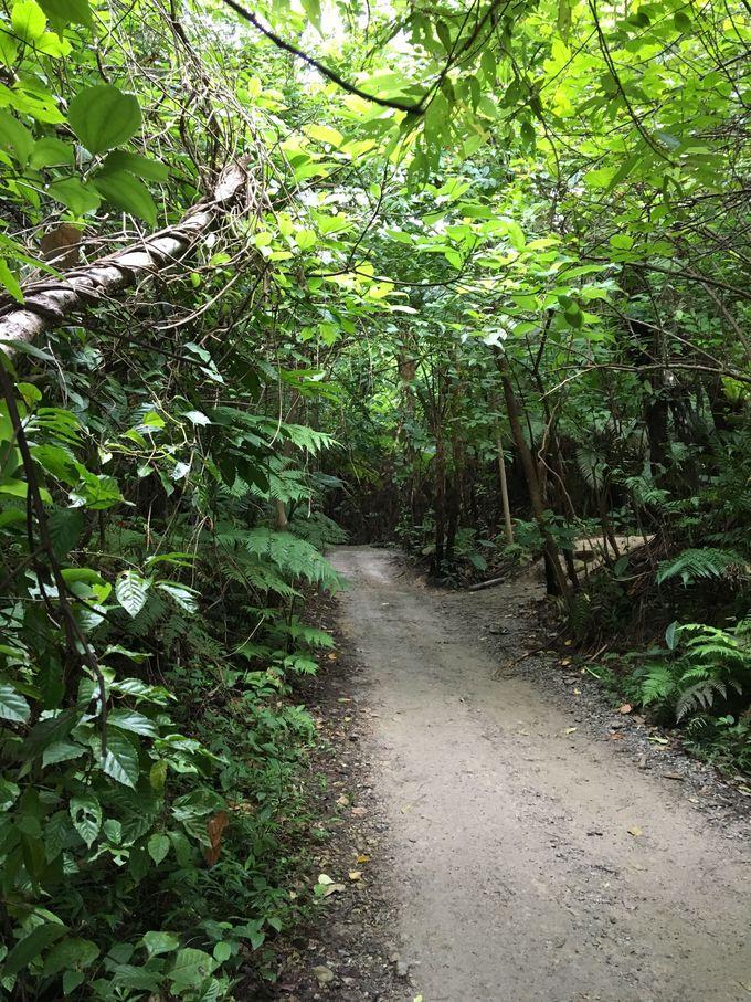 雨の日は特にオススメ!やんばるの森をバギーで疾走