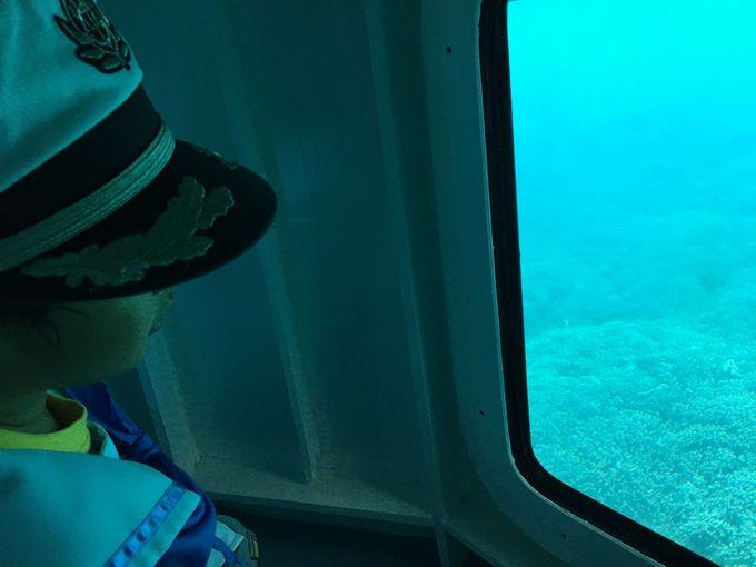 大型グラスボートの操縦体験をしてお客さんをサンゴ礁へ連れて行こう