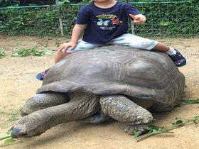 沖縄本島北部で珍しい動物たちと出会える厳選スポット