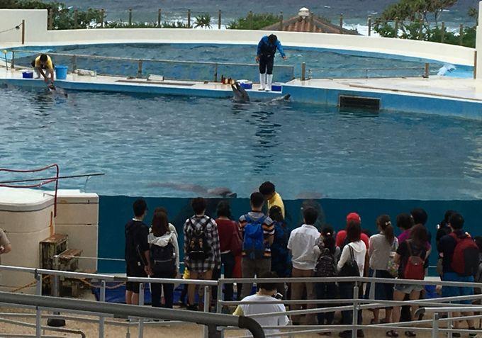 マンタやジンベエザメがいる「沖縄美ら海水族館」