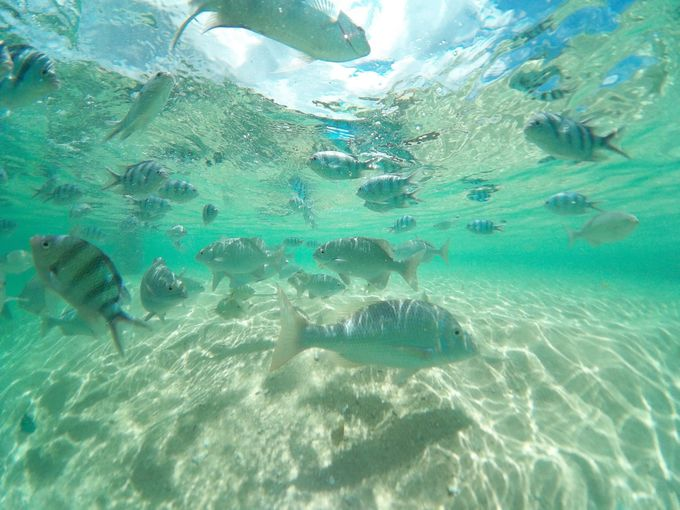 知る人ぞ知る沖縄本島の無人島ビーチ