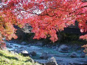 東京の奥座敷・奥多摩「御岳渓谷」で出会う紅葉と水、そしてオオカミも!